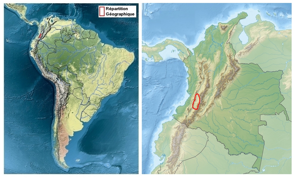 zone de répartition de Parides erithalion cauca (+ zoom sur la Colombie)